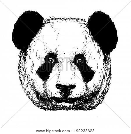 Hand drawn panda. Jpeg version.