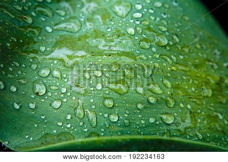 Green leaf with raindrops. Vegetation - the lungs of the planet. Background Dew on grass macro.
