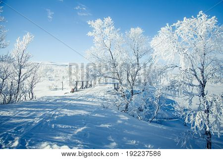A Beautiful White Landscape Of A Snowy Norwegian Winter Day With A Small Wooden Foot Bridge