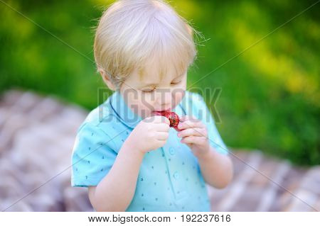 Beautiful Little Boy Eating Strawberry During Picnic In Summer Park