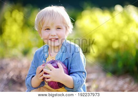 Cute Little Boy Holding Fresh Organic Red Cabbage In Domestic Garden
