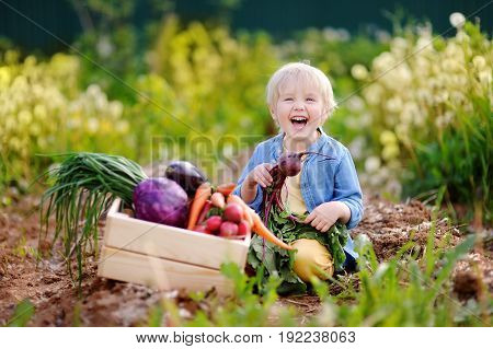 Cute Little Boy Holding Fresh Organic Beet In Domestic Garden