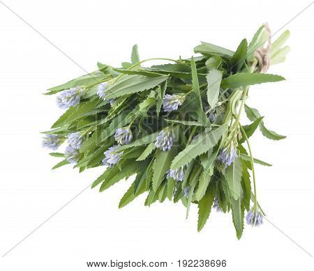 foenum graecum Fenugreek Methi herb with leaves seeds used in spices and flavouring