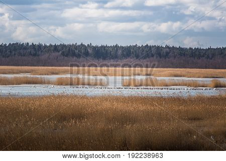 A Beautiful Early Spring Landscape With Migratory Birds