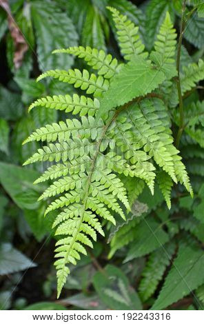 Ferns leaf green natural background. Green bush of fern in the forest