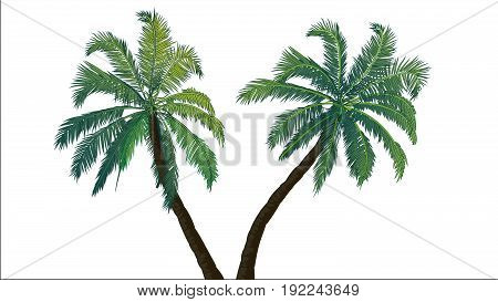 Two palm trees. Tropics. Places of subtropical and tropical climates. Resort in the tropical areas. Rest. Nature tropics.