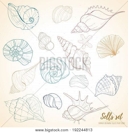Summer paradise holiday marine set. Seashell illustration can be used for holiday cards, invitation, postcard, menu or website Hand draw underwater objects with sea shells and sea star