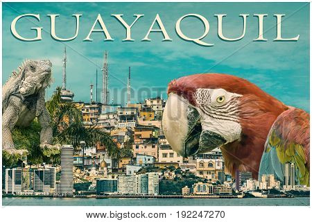 Guayaquil city touristic postal design collage with parrot and iguana against landmark panoramic cityscape photos