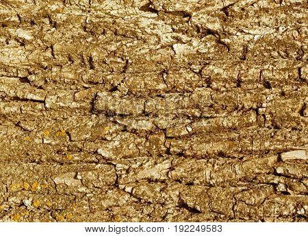 Tree Bark Texture In Orange Tone