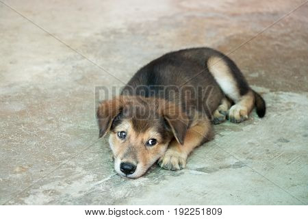 Brown white hybrid dog lying down on concrete floor