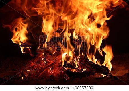 Camp fire on a dark background. Burning firewood