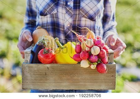 Woman Holding Crate With Vegetables On Farm