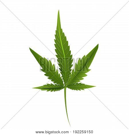 Leaf of marijuana isolated on white. Graphic design element for print, web, print, t-shirt. Vector illustration.