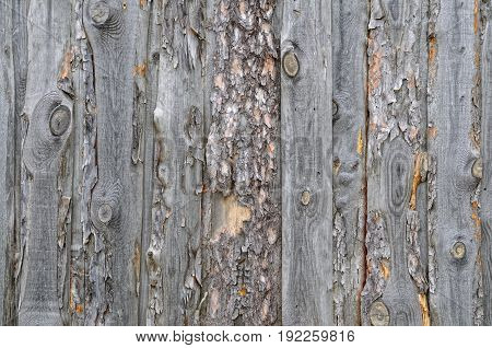 Background of old pine slabs with bark