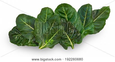 Chard leaves (leafy green vegetable) on white background
