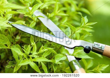 Garden bushes scissors trim trimming green activity