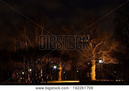 Very old oak tree in the Park at night in the light of streetlights. The autumn in Kolomenskoye park Moscow.
