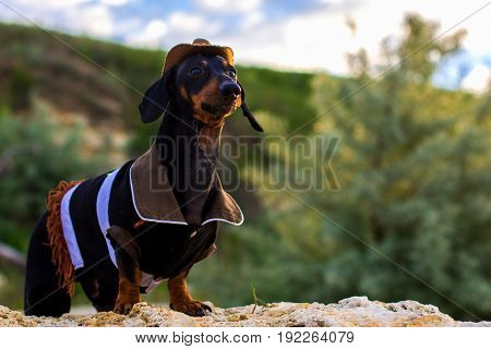 Horizontal portrait of a dog (puppy) breed dachshund black and tan in a cowboy costume sits on a stone against a background of green hills and sky.