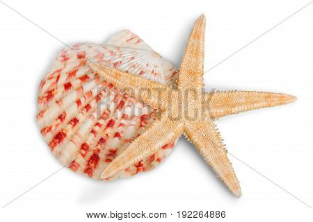 Isolated star shell starfish color white background