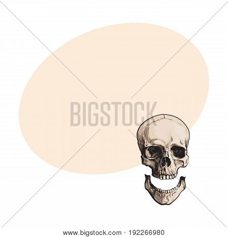 Hand drawn human skull, anatomical model with separated lower jaw, jawbone, sketch style vector illustration with space for text. Realistic hand drawing of human skull with separated jawbone