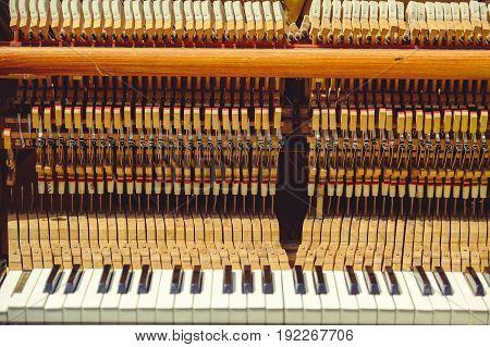 Piano Strings And Keys