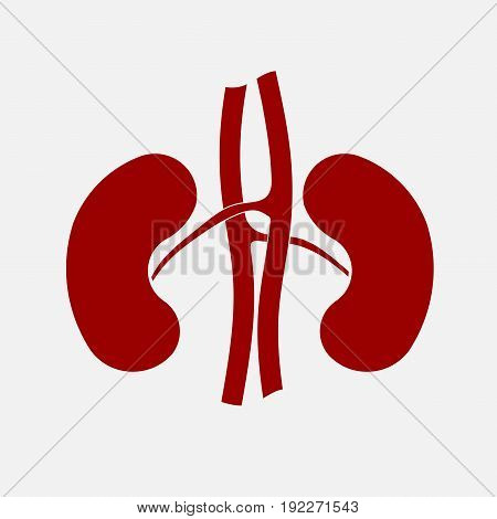 icon human kidney anatomy organs fully editable image