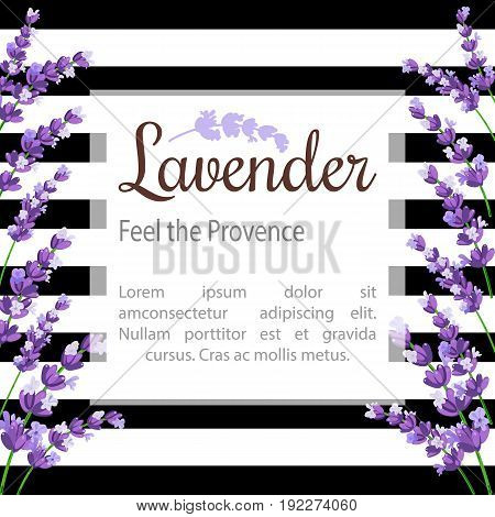 Lavender Card with flowers. Vintage Label with provence violet lavender with text place. Background design for natural cosmetics beauty store health care products perfume