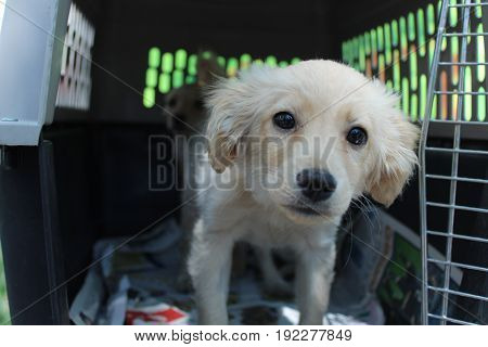 A puppy rescued from the streets of guadalajara mexico locked in a cage with his brother