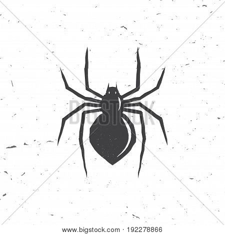 Spider silhouette in retro style. Vector illustration.