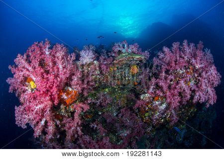 Soft coral colony on the rock background sun ray Similan island Thailand