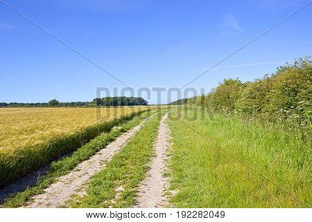 Barley Field And Farm Track