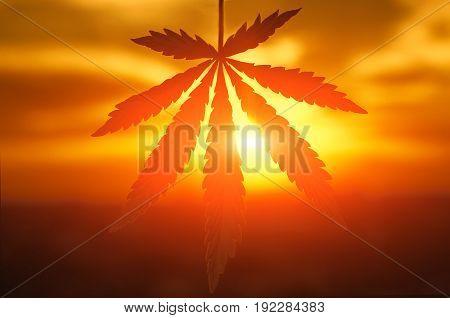Cannabis Or Marijuana Leaf Silhouette In Sunlight. Marijuana Leaf. Medical Cannabis Plant. Graphic D