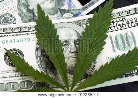 Marijuana Leaves On A Stack Of Dollar Bills. Money With Marijuana Leaf Close Up High Quality. Cannab