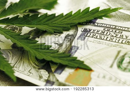 Marijuana Goes Out For A Hundred Dollar Bills. Money With Marijuana Leaves Close-up, High Quality. H