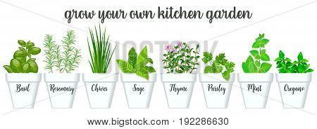 Set of vector culinary herbs in white pots with labels. Green growing basil sage rosemary chives thyme parsley mint oregano with text above. Gardening. For advertising poster banner web