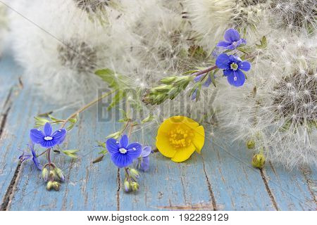 Summer flower background with fluffy dandelions and little flowers.