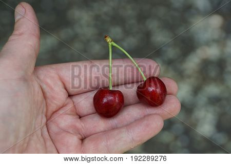 Two ripe red cherries on an open palm