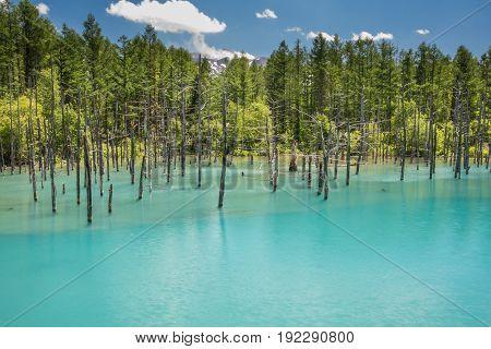 Blue pond (Aoiike), Biei, Hokkaido Prefecture, Japan
