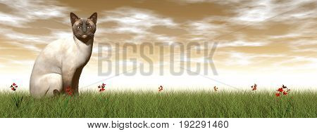 Siamese cat standing quietly in the grass by sunset - 3D render