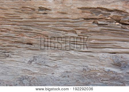 texture of traces of termites eat wood background
