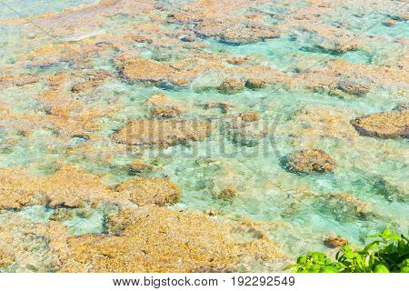 Tropical patterns and colors of coral reef sea washing over reef