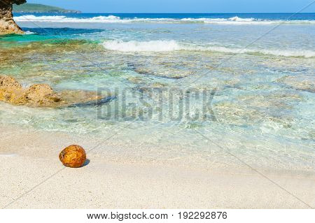 Coconut washed up on small isolated tropical beach on South Pacific Island Niue.