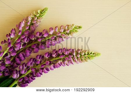 Purple Flowers Of Lythrum With Leaves On The White Background.