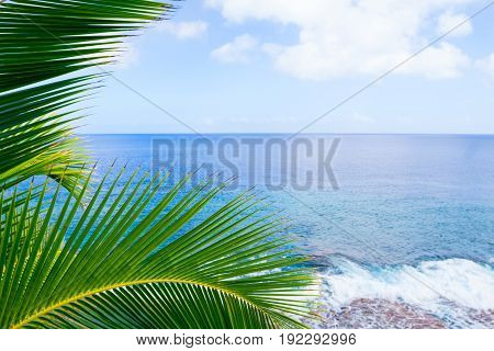 Tropical scene palm trees and fronds framing background scene over ocean distant horizon and sky.