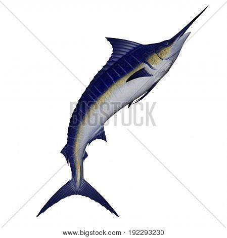 Marlin fish jump isolated in white background - 3D render