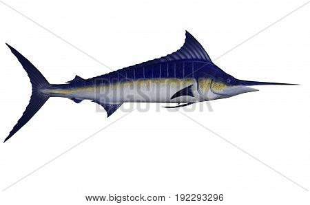 Marlin fish isolated in white background - 3D render