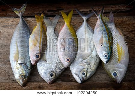 Mix Colorful Fresh Fishes.