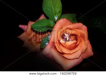 rose on dark background with wedding ring