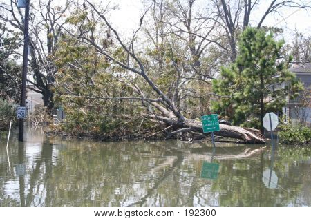 Downed Tree In New Orleans From Hurricane Katrina