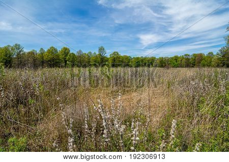 A rare oak savanna located at Kitty Todd State Nature Preserve in the Oak Openings region of Northwest Ohio.